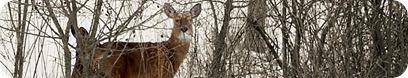 deer4copy