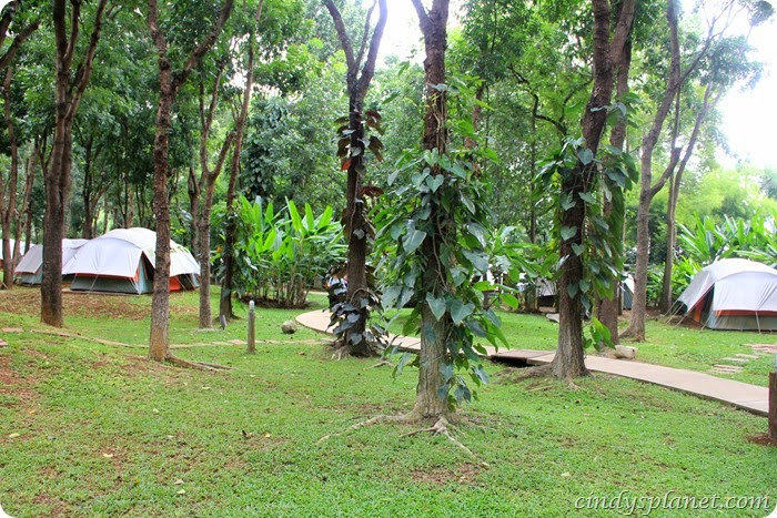 chok chai farm camp (12)