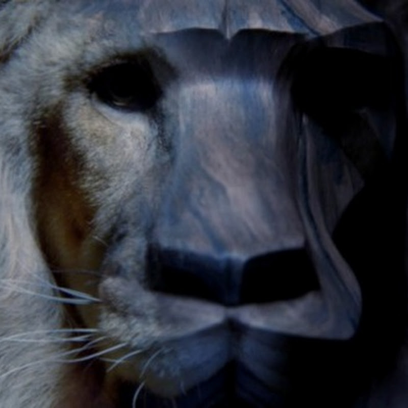Amarás este león