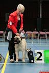 20130511-BMCN-Bullmastiff-Championship-Clubmatch-1618.jpg