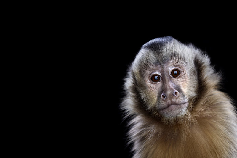 animal-photography-affinity-Brad-Wilson-monkey-1.jpeg