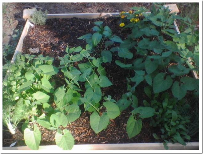 garden 0430