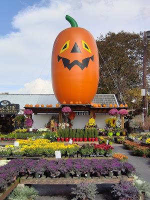 これでもかぼちゃです