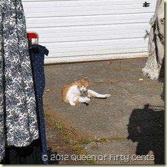 Dudley the driveway cat