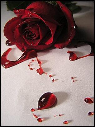 bleeding_red_rose1_by_UrDisasterousStock