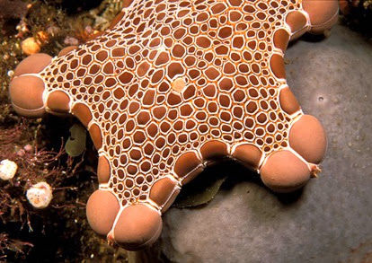 Amazing Pictures of Animals, Photo, Nature, Incredibel, Funny, Zoo, Starfish, Sea Stars, Asteroidea, Alex (11)