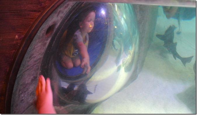 Sea Life Aquarium 087