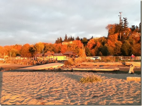 Maxwelton beach 019