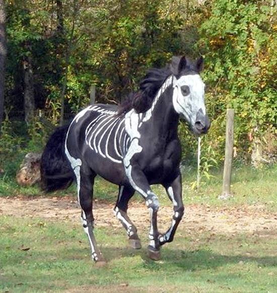Cavalo esqueleto 06