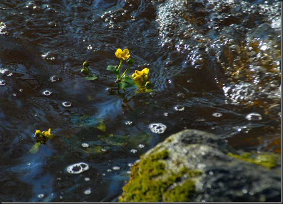 hanne  puun kukat 017