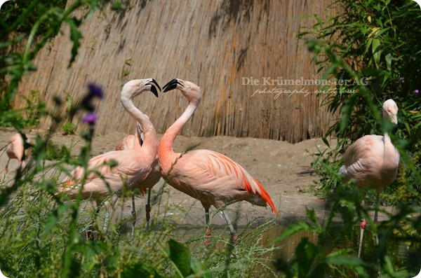Zoo Frankfurt 100713 (76)