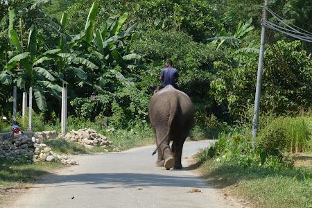 Elefant pe sosea