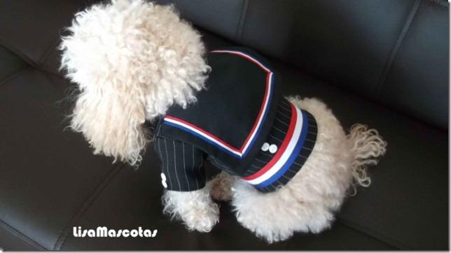 chaqueta-de-huaso-para-gatos-y-perros-talla-xs_MLC-F-3011712575_082012