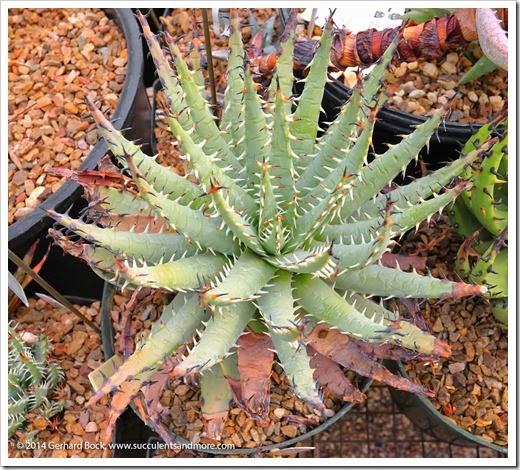 141231_Tucson_AridLands_0043