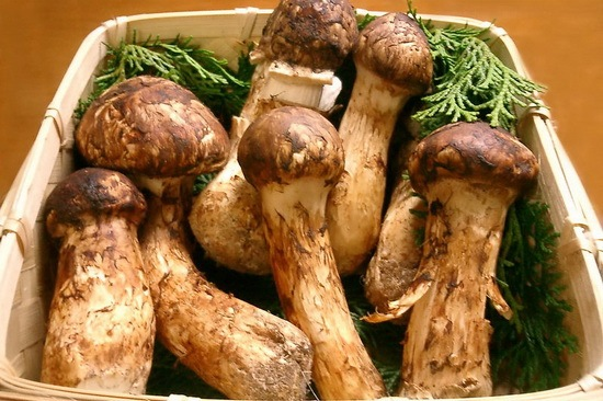 Matsutake_unusual_food