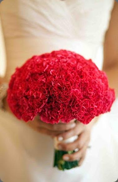 monobotanical MillPhoto-20100515-091 carnations last petal austin