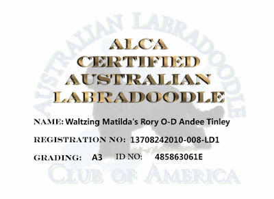 ALCA Certification of Australian Labradoodle Gorgeousdoodles Andee Tinley.