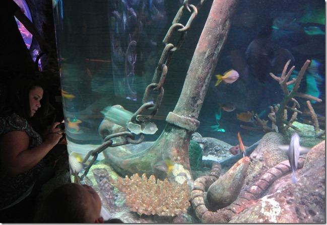 Sea Life Aquarium 123