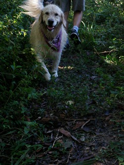 Pets Adventure 7 (46) - Cópia
