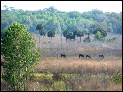 Buffalo, horses & deer 050