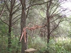 2008.09.10-008 squelette d'anhanguera