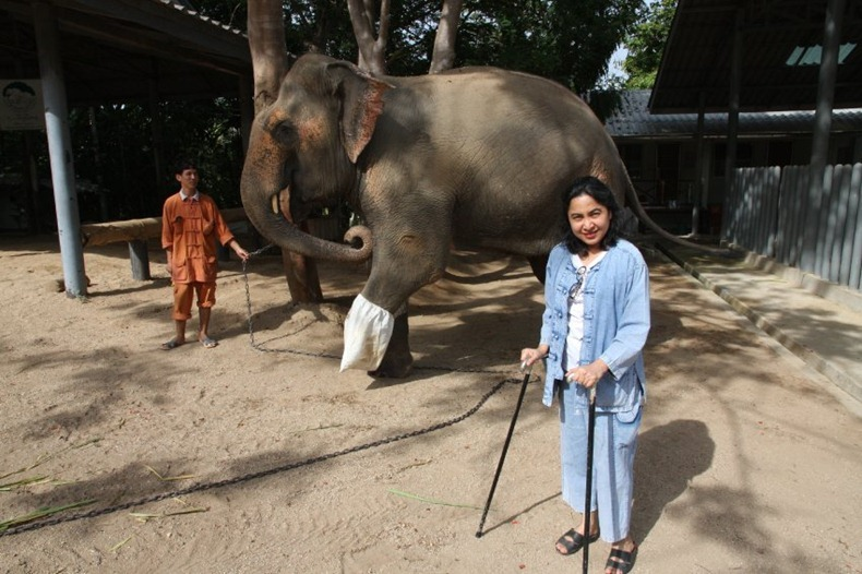 elephant-hospital-16