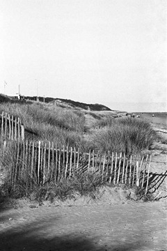Sand-Dune-Fencing-12