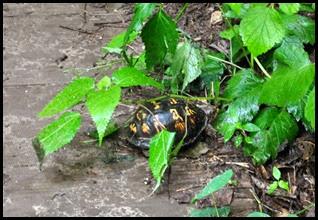 03 - Turtle