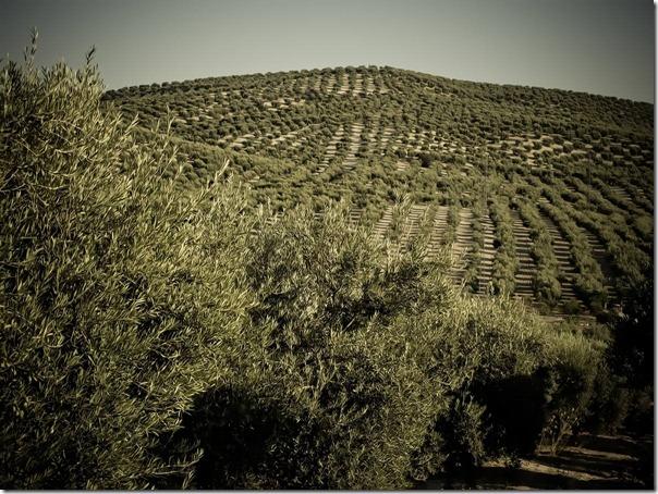 Mar de olivos, efecto simplificador