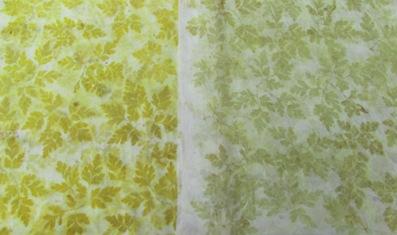 Unbekanntes Waldkraut Eco Print auf Wolle und Seide