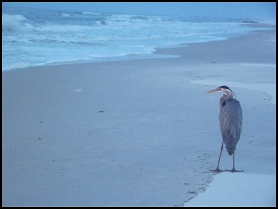 Monday at St. George Island Beach 036