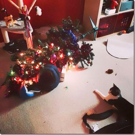 pets-hate-christmas-023