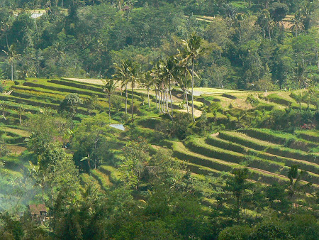 Bali photos: Rice pads