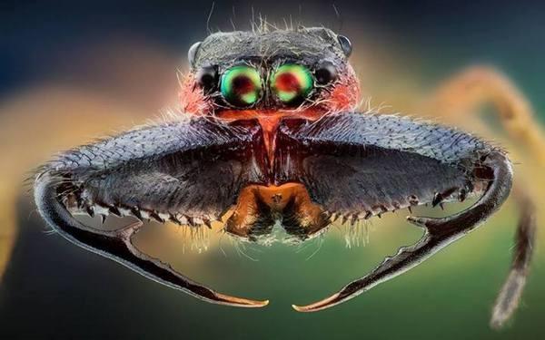 Macrofotografia mostra pequenos monstros vivendo entres 17