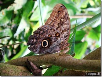 110528 X Schmetterlingsfarm (1)