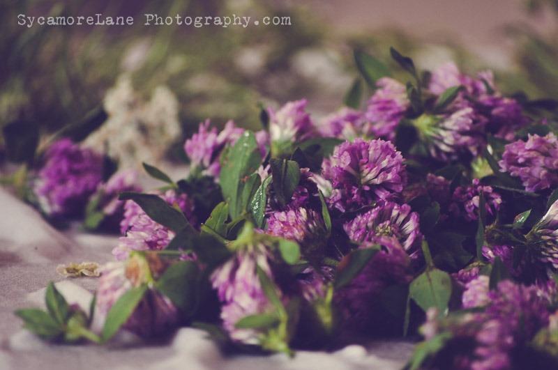 SycamoreLane Photography-Herbs (3)