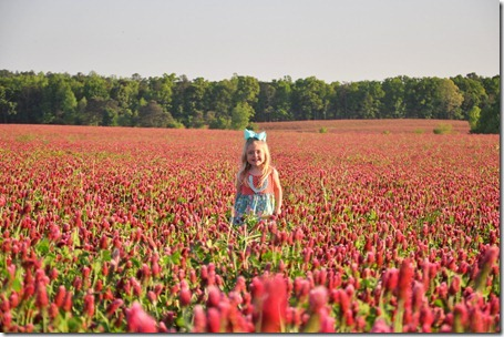 red clover pics 0423 (45)