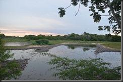 Thousands of caiman - Lisa