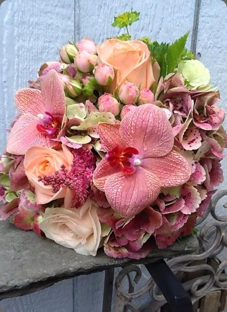 phals 1001094_10200497195248825_527930028_n mt. lebanon floral carmel doyle vandale
