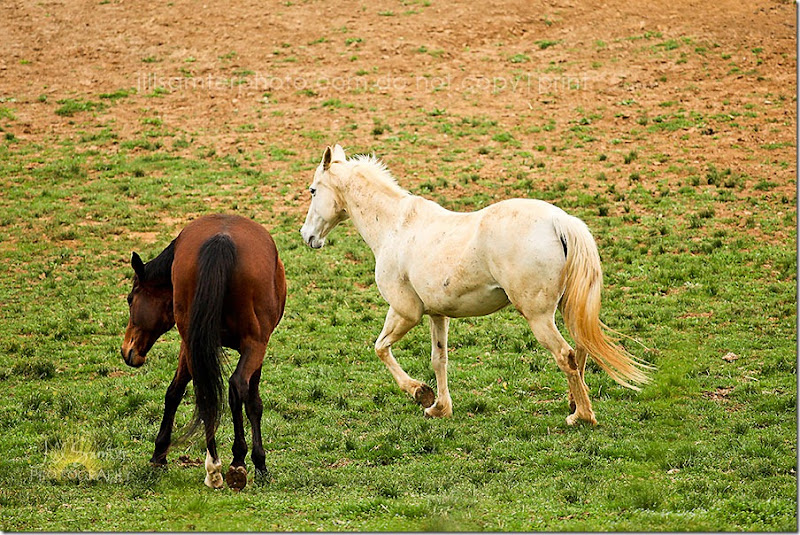 horses-5508