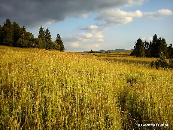 Łąki nad Mochnaczką