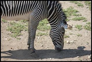 Zoo5 035