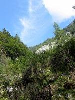 Zarasli travnik tik pod planino