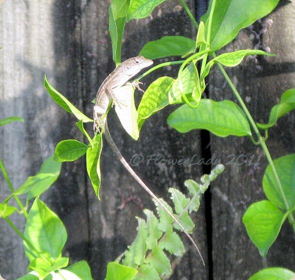 11-24-garden-visitor