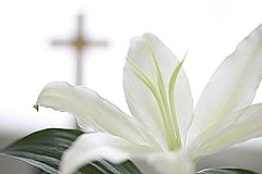 draft_lens1854984module149058639photo_1300816777Easter_Lily_sm
