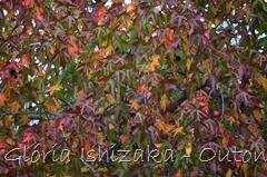 23 - Glória Ishizaka - Folhas de Outono