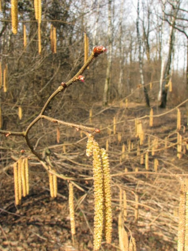 экотерапия для снятия стресса, Москва: http://ecotherapy.ru