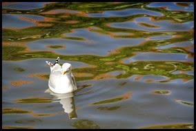 Bruges seagull_edited-1