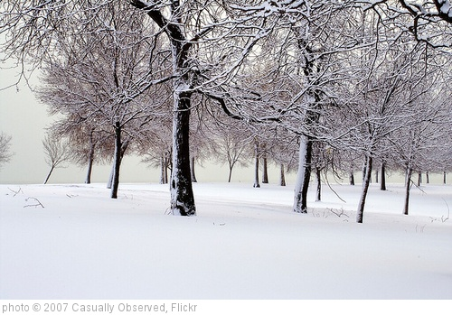 'Winter Trees' photo (c) 2007, Casually Observed - license: http://creativecommons.org/licenses/by-sa/2.0/