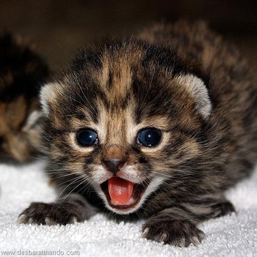 filhotes recem nascidos zoo zoologico desbaratinando animais lindos fofos  (16)